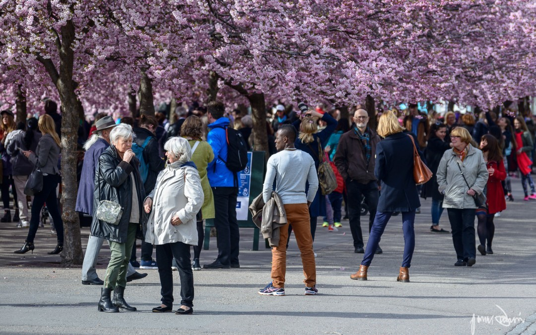 What makes Stockholm bloom
